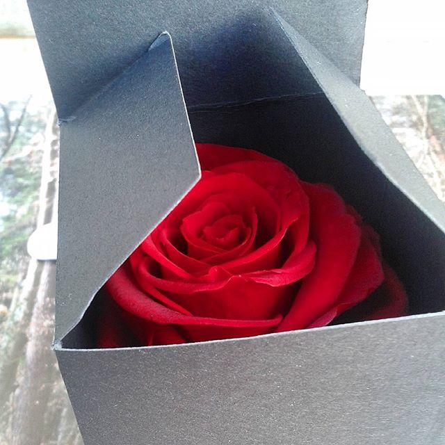 crin noir rose ternelle parfum e rouge id e cadeau chic. Black Bedroom Furniture Sets. Home Design Ideas