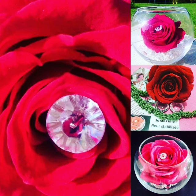 rose stabilisée artifleurs
