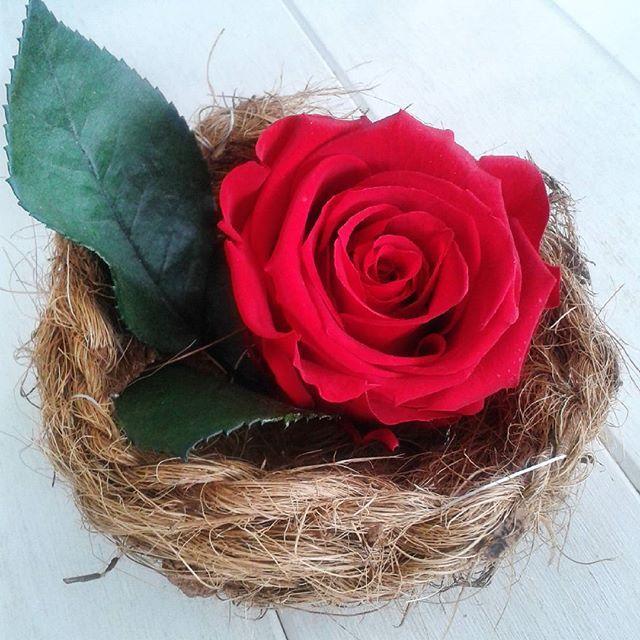 nid d 39 oiseau et rose eternelle rouge feuillage. Black Bedroom Furniture Sets. Home Design Ideas