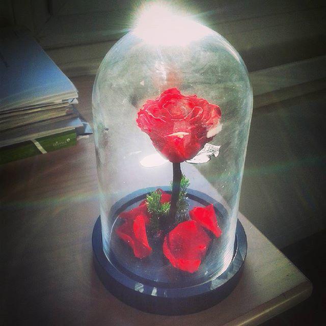 grande cloche en verre rose ternelle couleur au choix. Black Bedroom Furniture Sets. Home Design Ideas