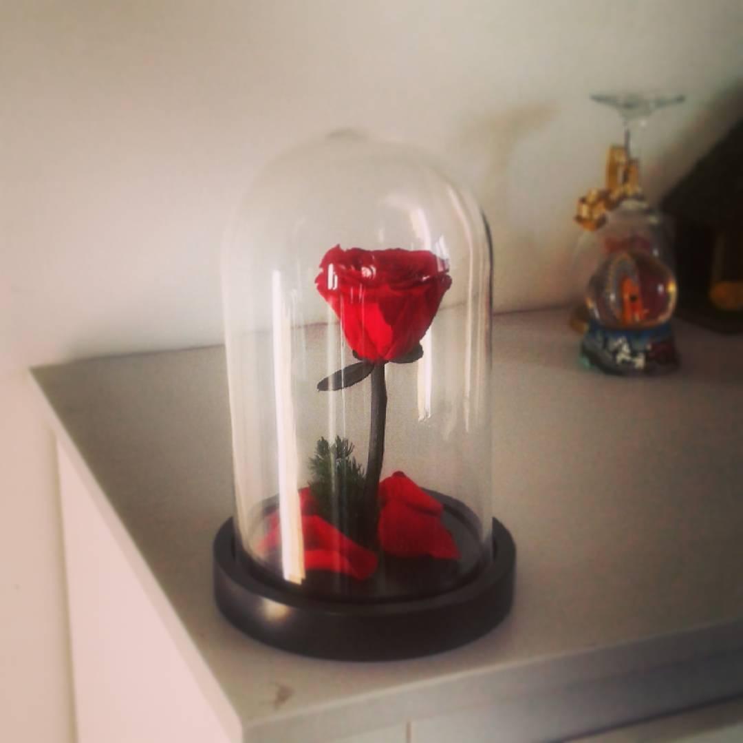 Cloche verre led et rose ternelle la belle illumin e - Rose sous cloche la belle et la bete ...