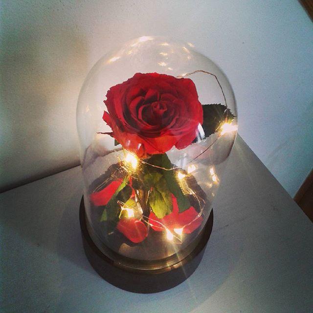 Artifleurs roses ternelles naturelles fleurs artificielles - Rose sous cloche la belle et la bete ...
