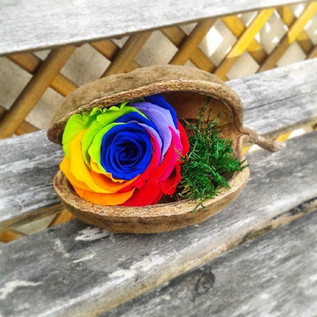rose éternelle artifleurs rainbow