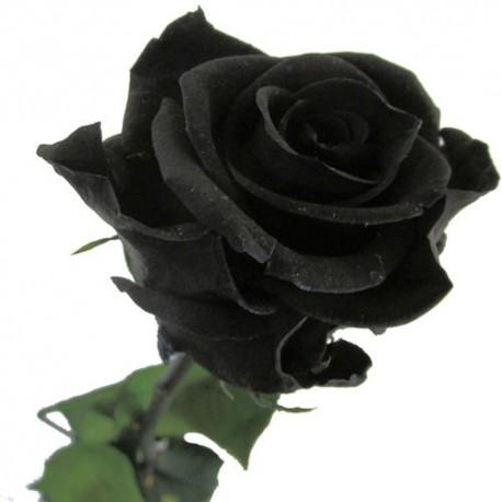 Bouquet 3 noir