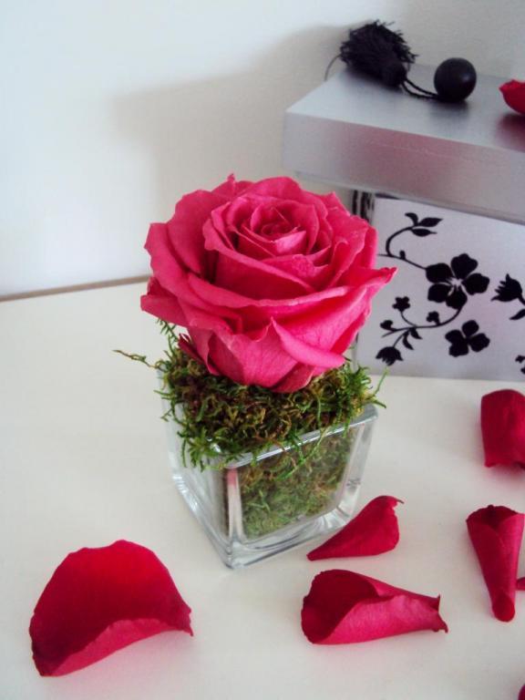 fleurs pr serv es stabilis es naturelles ternelles page 2 2. Black Bedroom Furniture Sets. Home Design Ideas