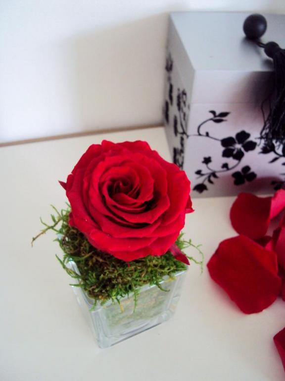 petit vase cube rose ternelle rouge mousse naturelle. Black Bedroom Furniture Sets. Home Design Ideas