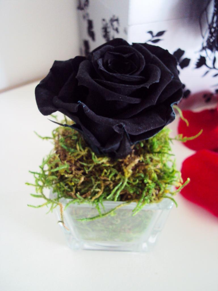 petit vase cube rose éternelle noire mousse naturelle fleur