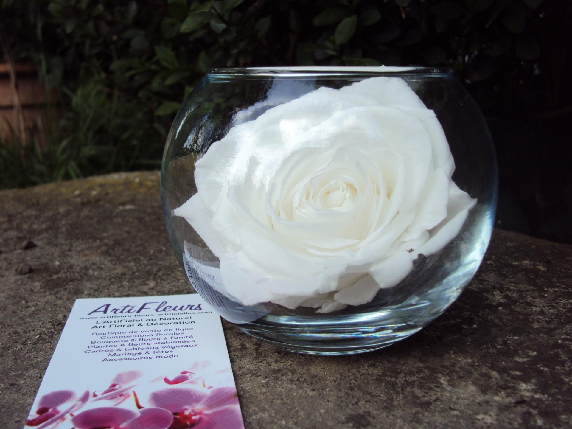 vase boule & rose eternelle (couleur blanche) rose naturelle