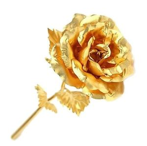 Golden rose a