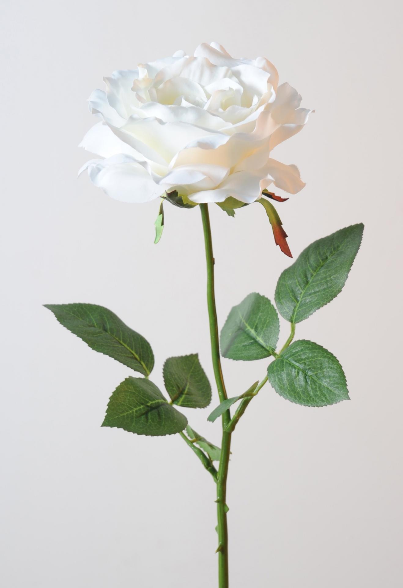 Rose georgia diam 14