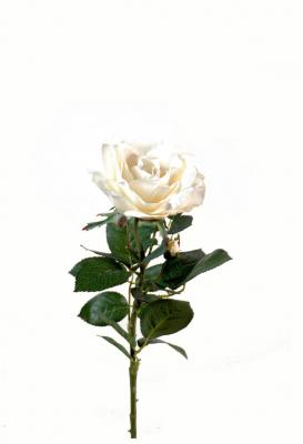 Rose joey