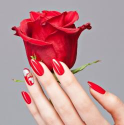 Rose parfumee2