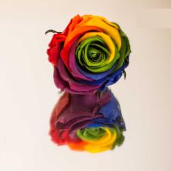 Rose rainbow artifleurs