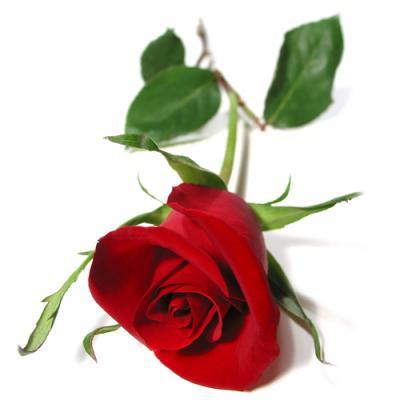 Rose rouge ARTIFLEURS