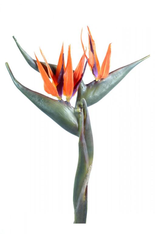 Strelitzia geant