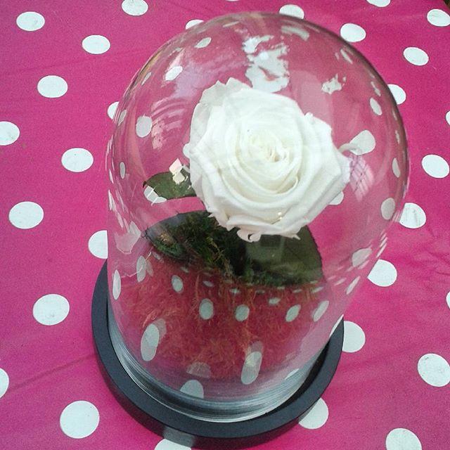 grande cloche verre 20cm rose ternelle blanche neige. Black Bedroom Furniture Sets. Home Design Ideas