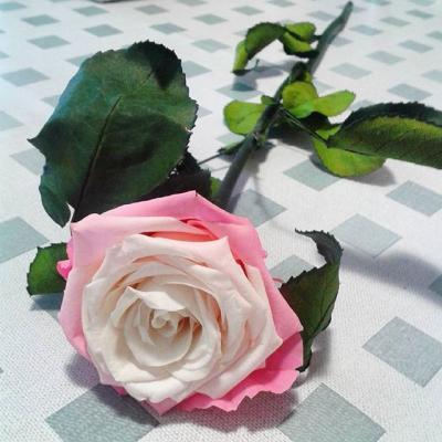 fleurs éternelles