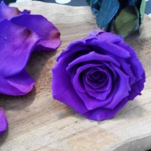 fleur eternelle artifleurs