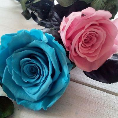 rose de naissance artifleurs