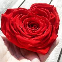 rose éternelle coeur