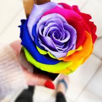 Rose éternelle arc-en-ciel Rainbow