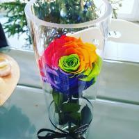 rose rainbow