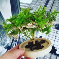 bonsai artifleurs