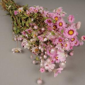 Botte de rodanthe rose naturelle sechee