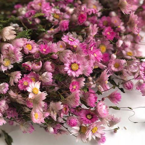 Botte de rodanthe rose naturelle sechee2