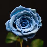 Bouquet 3 bleu ciel