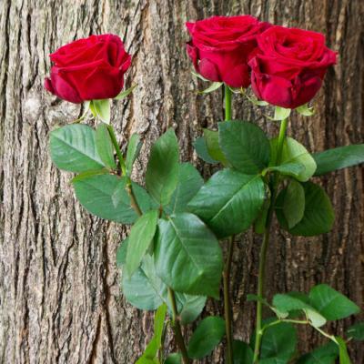 Bouquet 3 rouge