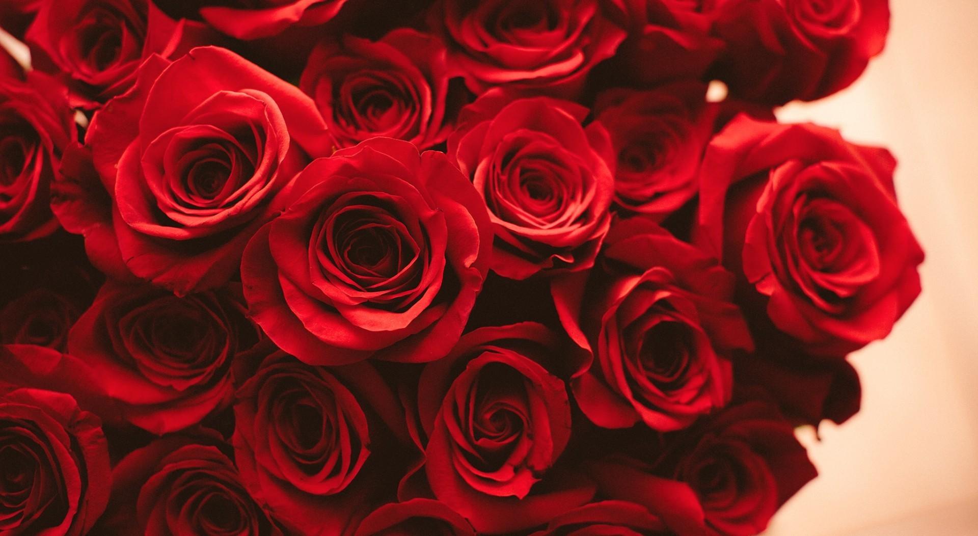 Bouquets de roses éternelles
