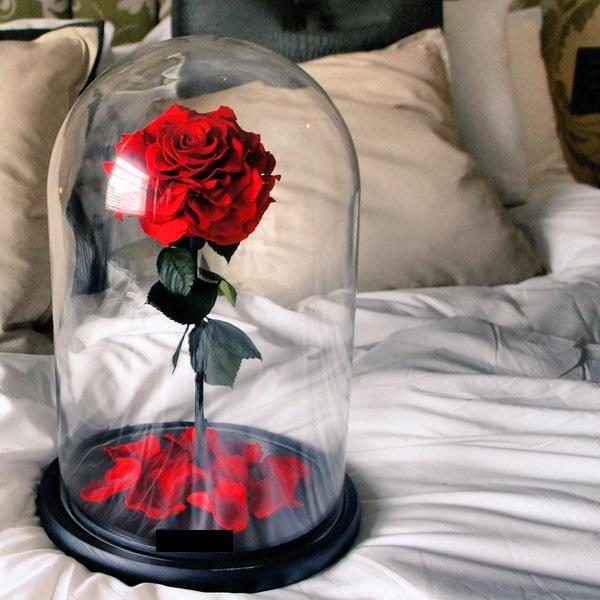 cloche en verre et roses ternelle la belle. Black Bedroom Furniture Sets. Home Design Ideas