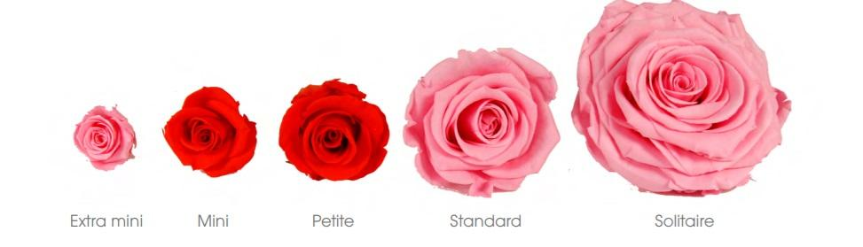 Couleurs roses taille