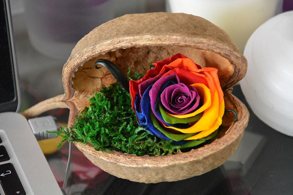 """La rose Arc-en-Ciel """"Rainbow"""""""