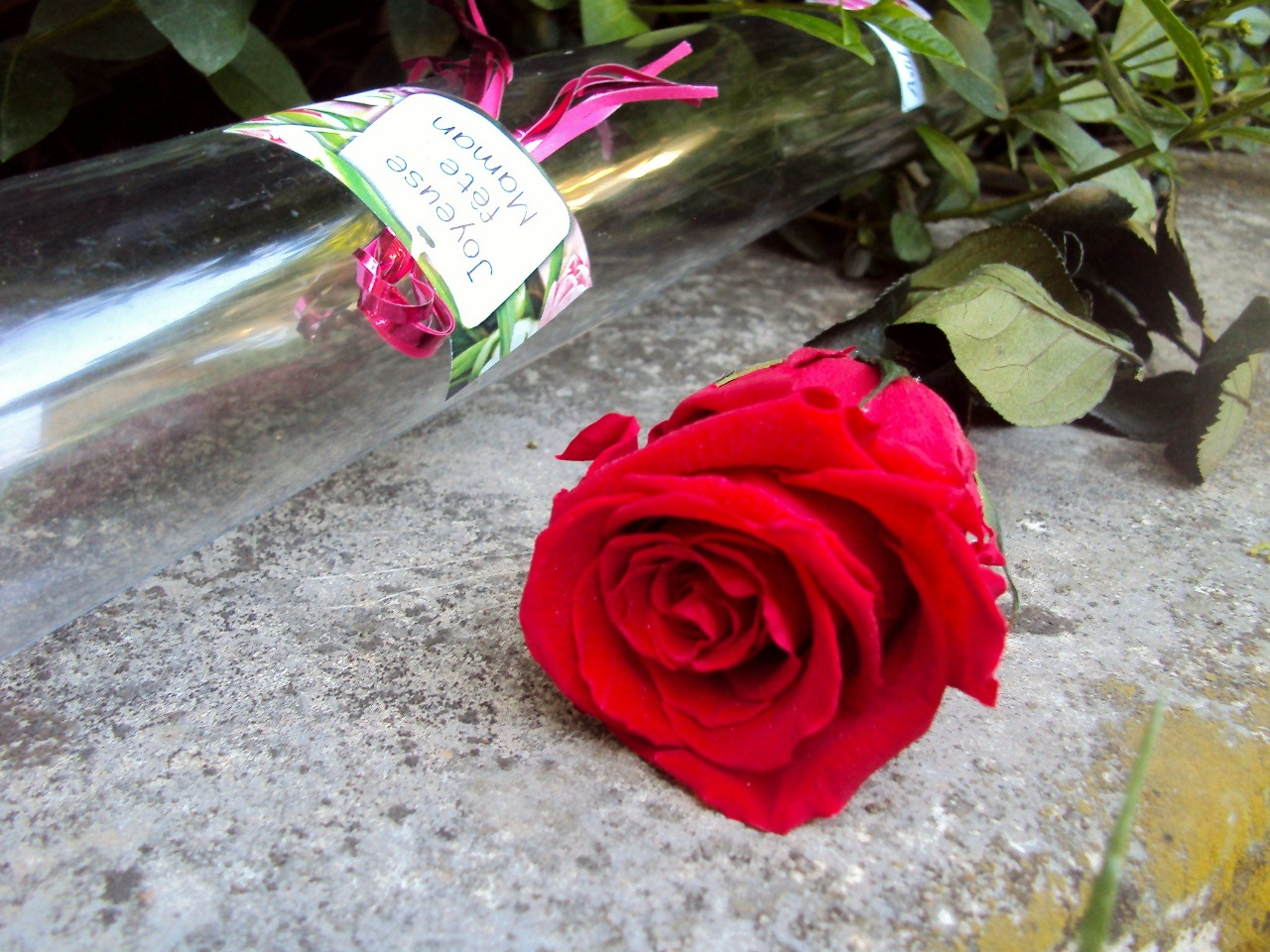 Cadeau Fete Des Grands Meres Rose Stabilisee Fleurs Bouquet