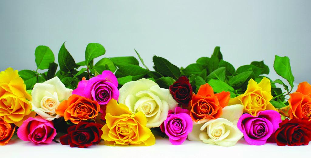 Des roses de toutes les couleurs