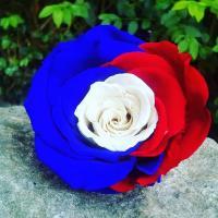 Rose bleu blanc rouge