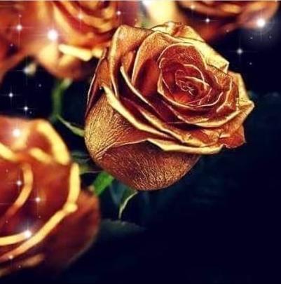 Rose doree