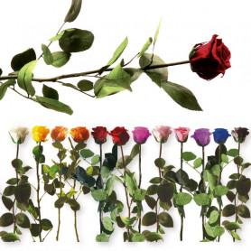 Rose eternelle artifleurs 1