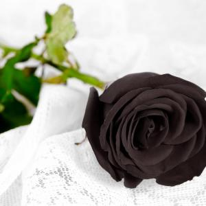 Rose noire fleur couleur signification 1