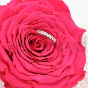 Rose xxl fuchsia