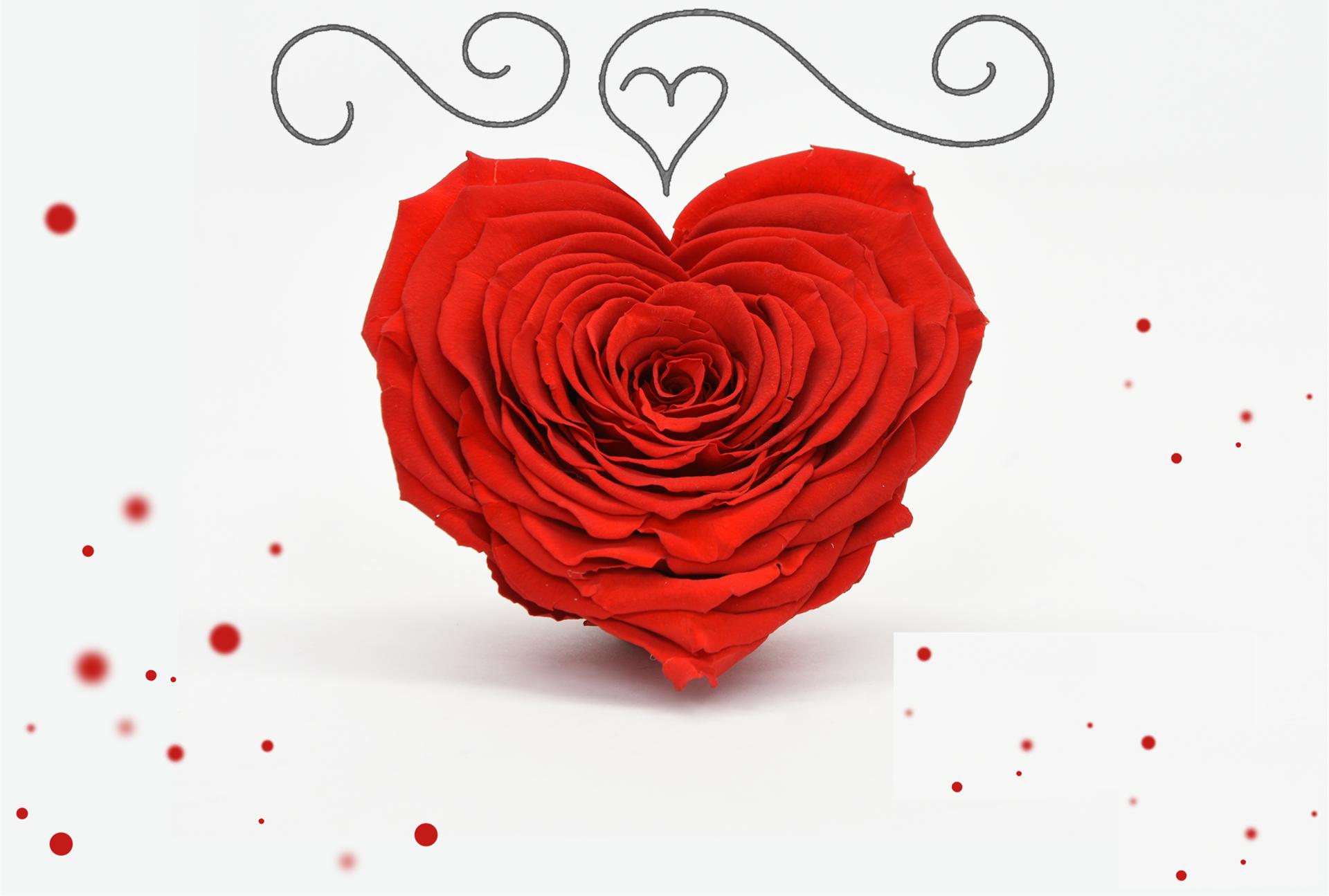 La rose coeur
