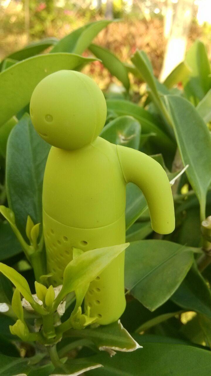 The mr vert