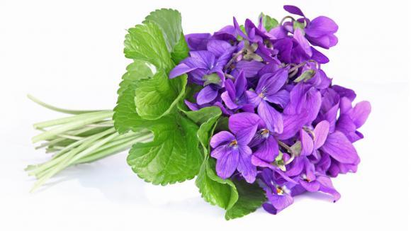 Violette savon